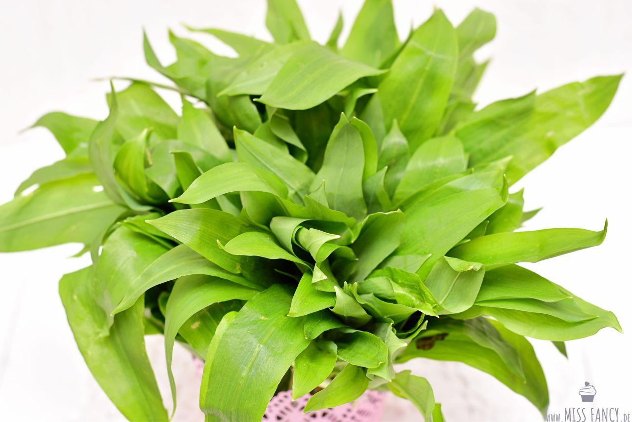 Rezept-Bärlauchpesto-Bärlauchblätter